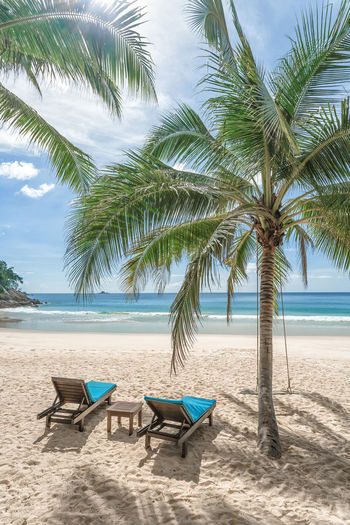 Chairs and palm trees on beach against sky