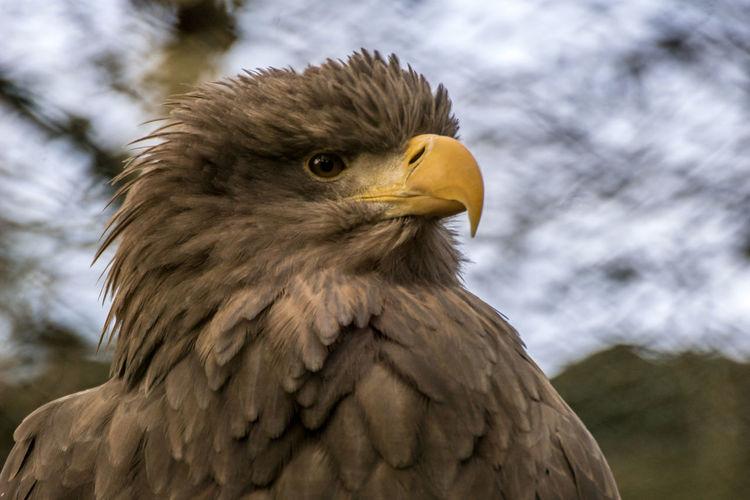Birds Birdlover