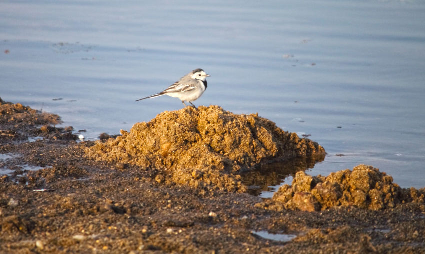 Bird EyeEm Selects Bird Water Close-up White Stork Sea Bird