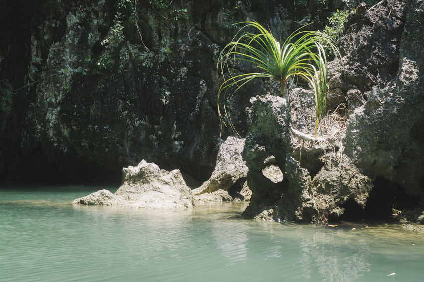 Rock Rock Formation Thailand Tranquility Travel Beauty In Nature Day Nature No People Outdoors Rock - Object Scenics Tranquil Scene Travel Destinations Tree Water
