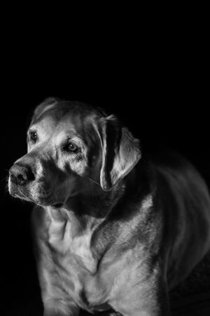 Pets Pet Photography  Dog I Love My Dog B&w Photography ds