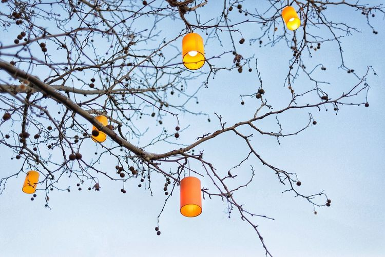 Lamp and city Colors Of Life Colors Of City Orange - Fruit Orange Color Citrus Fruit Tree Branch Fruit Orange Tree Orange Juice  Outdoors No People Celebration Bare Tree Sky Beauty In Nature Nature