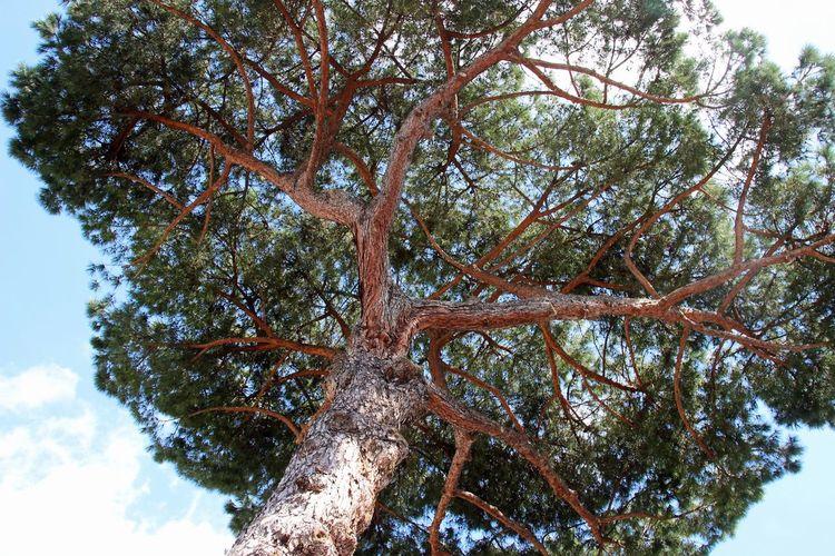 tree in Roma 🇮🇹🌳🍃 Tree Nature Naturelovers Scenery Blue Sky Beauty In Nature Green Lightful Sunshine Italy Italia Roma Travel Adventure TripTree Landscape City Greenlifestyle Sky Journey ExploreEverything Outdoors Travelling Natur