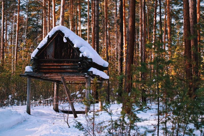 Snow Winter Cold Temperature Forest Tranquil Scene Season  Weather Non-urban Scene Tree Tranquility WoodLand Covering Scenics Nature Tree Trunk Beauty In Nature Outdoors Russia Siberia Tourism Day
