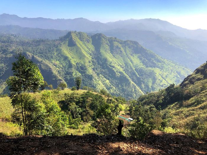 View to Little Adams Peak Scenic View Scenics - Nature Beauty In Nature Plant Mountain Tranquil Scene Growth Tranquility Green Color Environment Nature Landscape Mountain Range Idyllic Sunlight