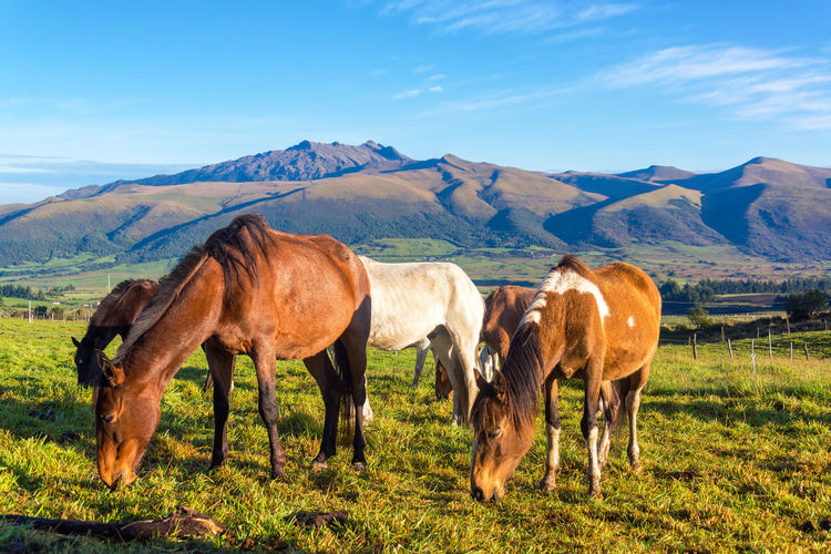 Horses grazing on grassy landscape against sky