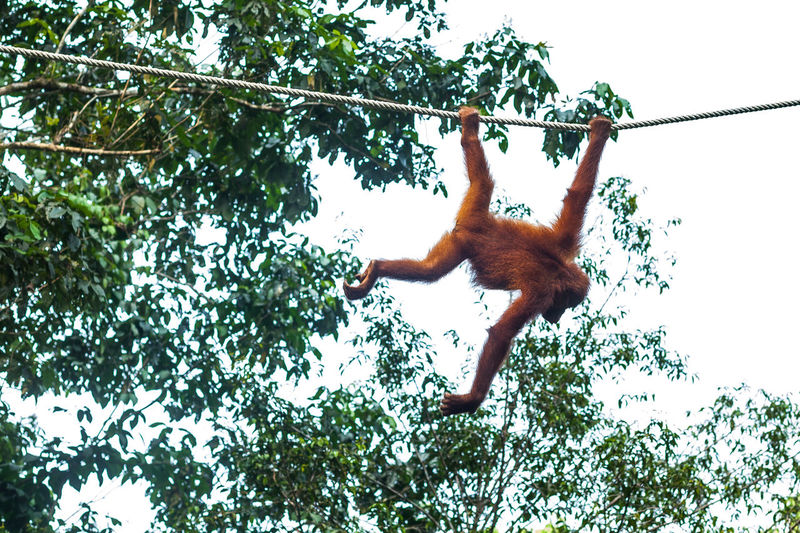Low angle view of monkey hanging on tree