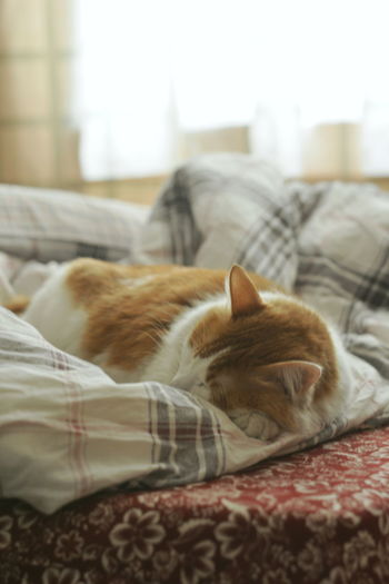 Pets Animal Themes Domestic Animals Domestic Animal Cat Bedroom Bed Lying Down No People Resting Indoors  Sleeping One Animal Domestic Room Domestic Cat Relaxation Feline Furniture Mammal VSCO