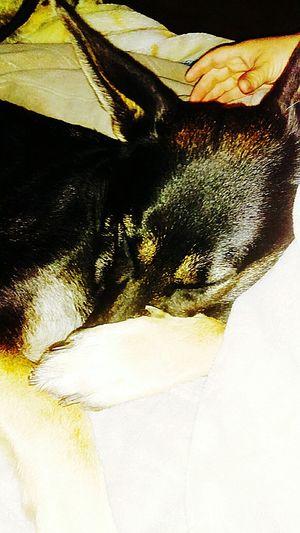 Roxy....my spoiled little girl