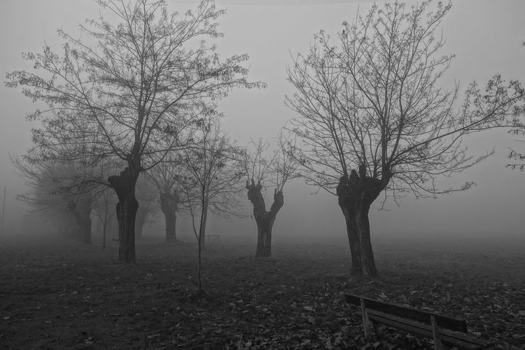 Parco Alessandria Cittadella Foggy Morning Foggy Day Foggy Morning