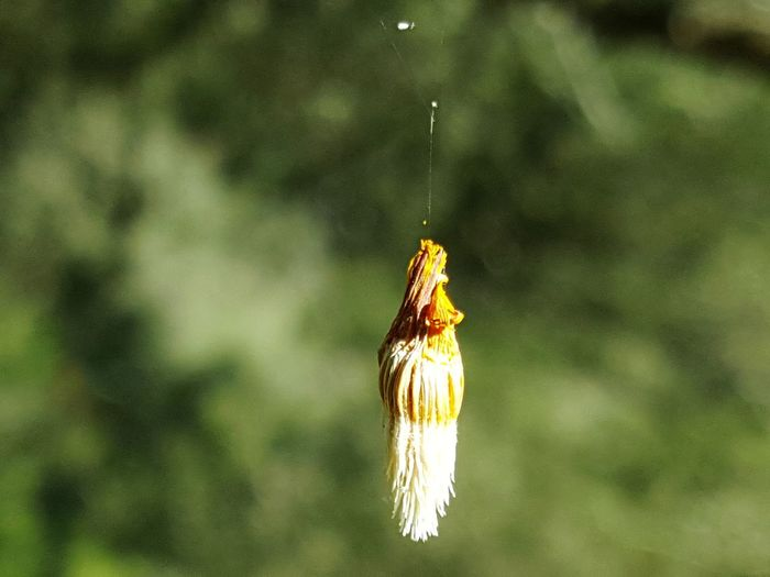 Nature Beauty In Nature Misterious Mystery Hanging Flying Breeze Spinning Thread Hanging At A Spinning Thread
