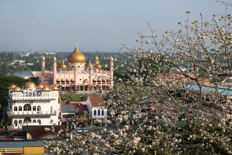 Cotton Tree Cotton Tree Plant Architecture Building Exterior Built Structure City Day Dome Kucing Mosque Nature No People Outdoors Place Of Worship Religion Sarawak Sky Spirituality Travel Destinations Tree