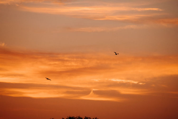 Sunset Sky Bird Beauty In Nature Vertebrate Flying Animal Themes Animals In The Wild Orange Color Animal Cloud - Sky Animal Wildlife Scenics - Nature Mid-air Silhouette One Animal Tranquil Scene No People Tranquility