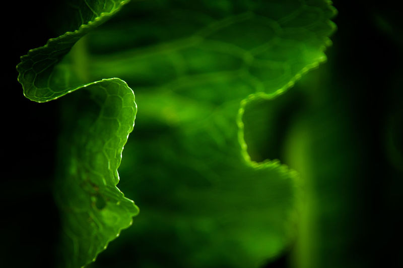 Backgrounds Beauty In Nature Close-up Day Detail Details Of Nature Freshness Green Color Growth Leaf Macro Macro Photography Nature No People Outdoors Paralell Shallow Depth Of Field Tendril
