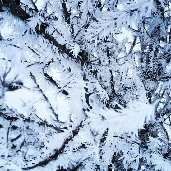 Snowing Snow ❄ Snow EyeEm Nature Lover EyeEm Frozen Backgrounds Full Frame No People Nature Cold Temperature Day Outdoors Beauty In Nature Close-up