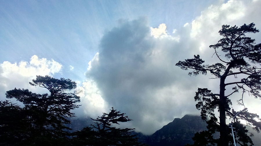 Sun Filtering Through The Clouds Day Time Beautiful Nature Tree Power In Nature Sky Cloud - Sky