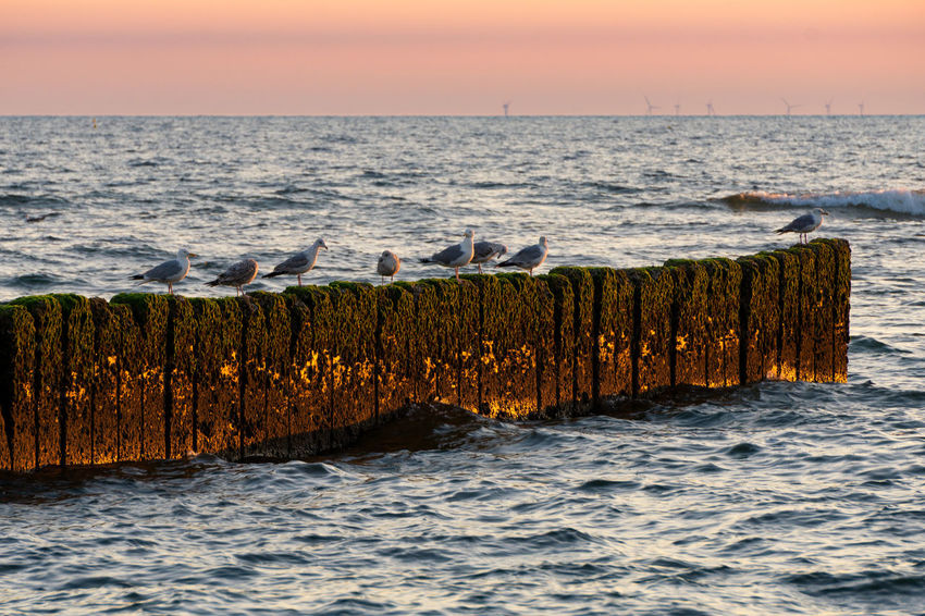 Möwe Sylt, Germany Animal Wildlife Beach Beauty In Nature Buhnen Horizon Horizon Over Water Nature No People Northsea Ocean Outdoors Scenics - Nature Sea Seagull Sunset Sylt Tranquil Scene Tranquility Water Wave