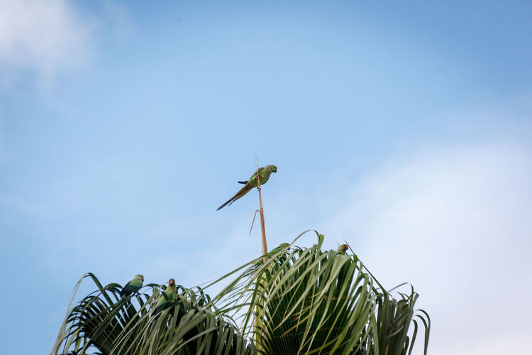 Low angle view of dragonfly on plant against sky
