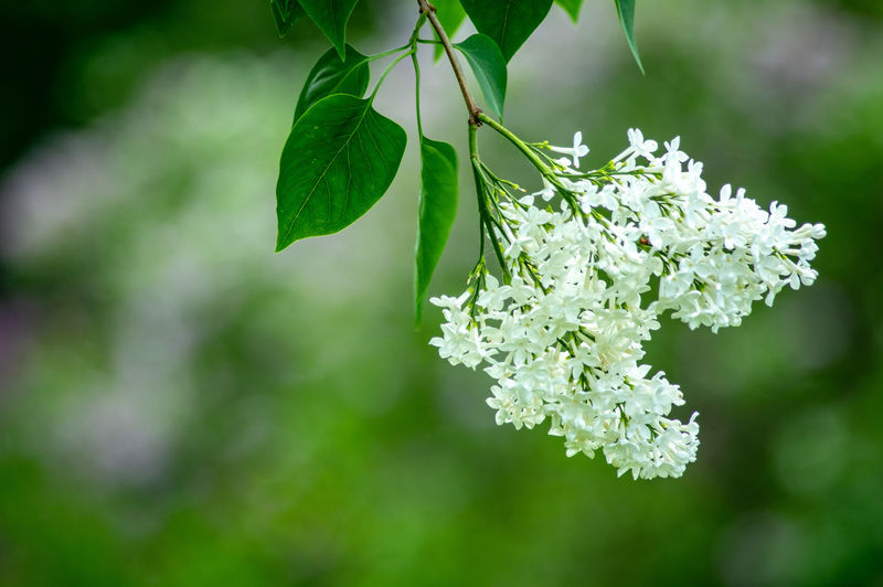 Flowers_collection Flowers Of EyeEm Flower Flower Head Leaf Branch Springtime Tree Hanging Close-up Plant Animal Themes