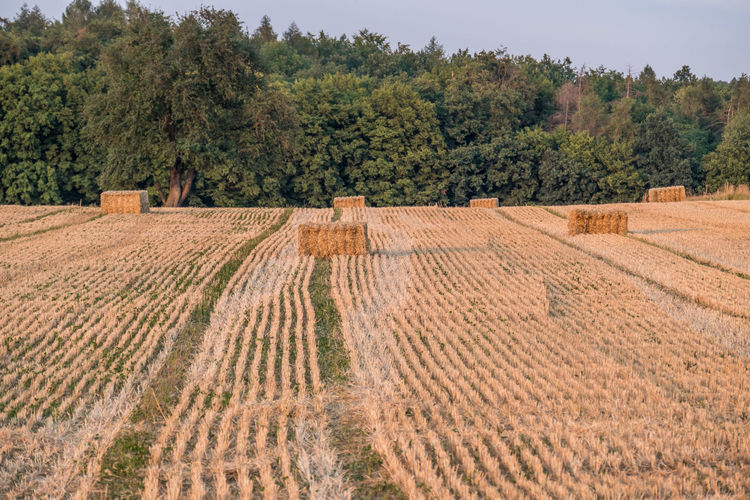 Scenic view of agricultural field against trees