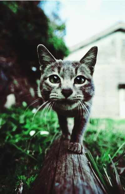Good morning Domestic Cat One Animal Looking At Camera Pets Portrait Whisker Feline Domestic Animals Animal Themes No People Alertness Mammal Close-up Outdoors Day The Great Outdoors - 2017 EyeEm Awards
