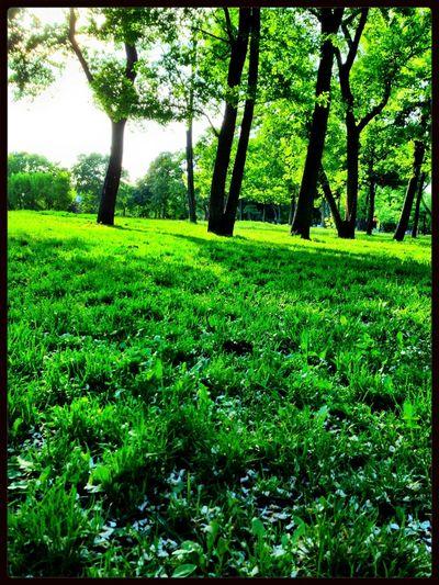 Running Green EyeEm Nature Lover