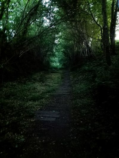 The path in the