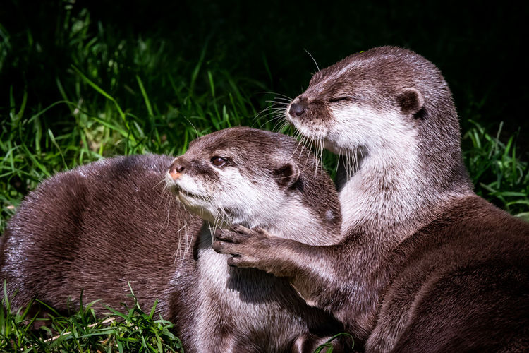 Close-Up Of Otters Against Plant