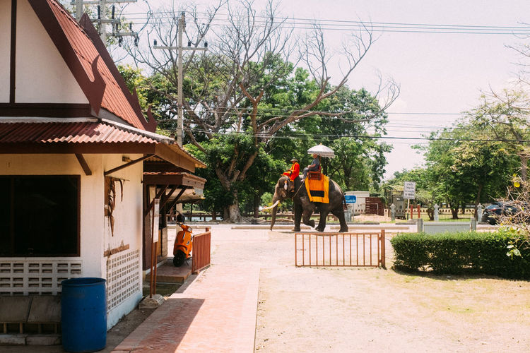 Safari in the City Fujifilm_xseries Thailand Ayutthaya Tree Architecture Built Structure Building Exterior Plant Nature Building Day Rear View Transportation Occupation Outdoors Mode Of Transportation One Person House Real People Residential District Men Working