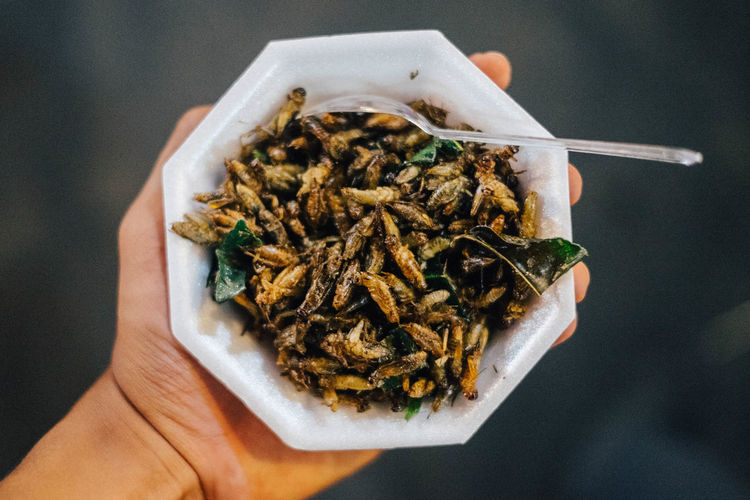 crickets as street food Crickets Food Street Food Nature Human Hand High Angle View Close-up Prepared Food Directly Above Ready-to-eat Served Serving Size Plate EyeEmNewHere