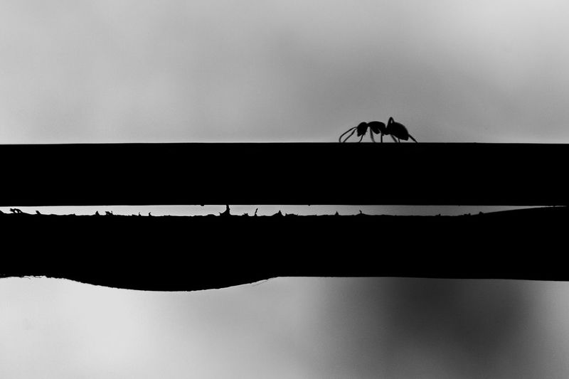 Ant Ants Built