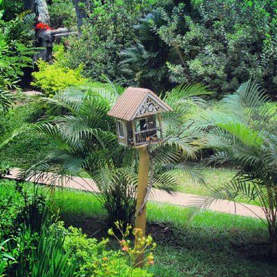 Instagallerys Instagalleries Instagram Birdhouse
