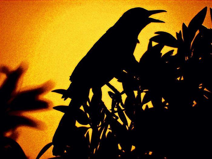 Sihouette  Bird