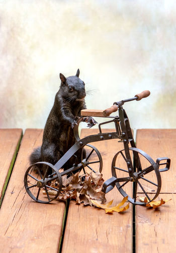 Cat sitting on bicycle