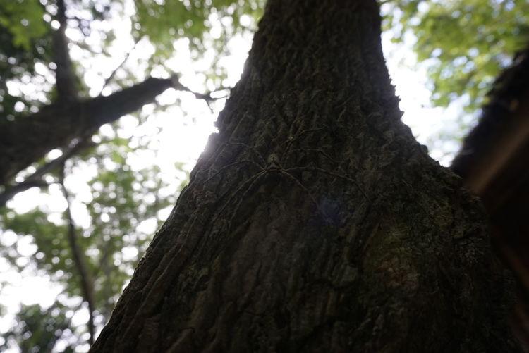 Spider Arachnid Forest Hidden Arachnids Arachnida