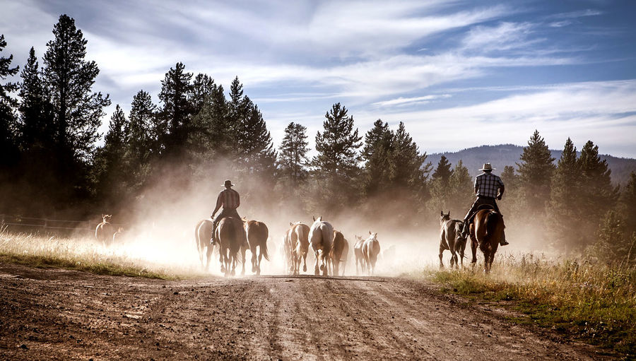 Rear View Of Horse Ride On Landscape