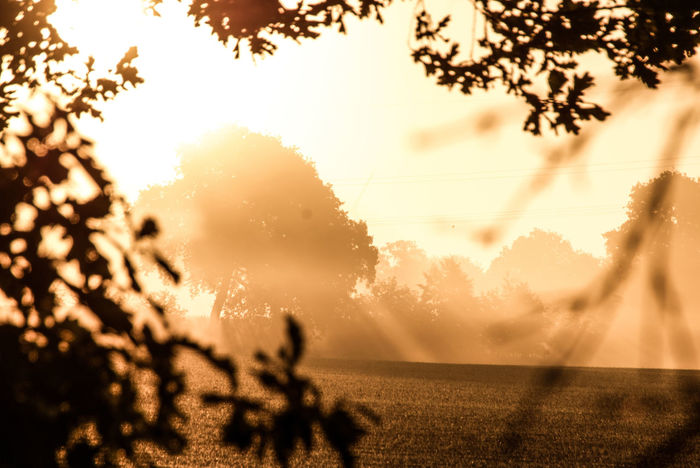 The Week on EyeEm Summer In Thoughts With You Beautiful Scenery Sunbeam Foggy Morning Scenery Sunrays Beautiful Morning Early Morning Den Tag Beginnen Tree Rural Scene Backgrounds Sunlight Sky Close-up Silhouette Calm Sunrise Idyllic Tranquility Tranquil Scene Scenics Atmospheric Mood Orange Color