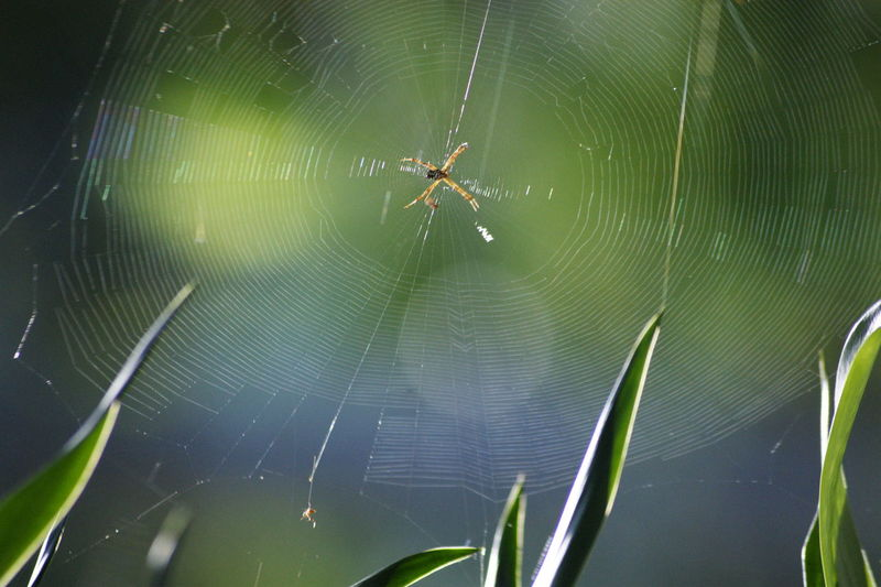 Beauty In Nature Green Color Natural Pattern No People Outdoors Selective Focus Spider Web Web