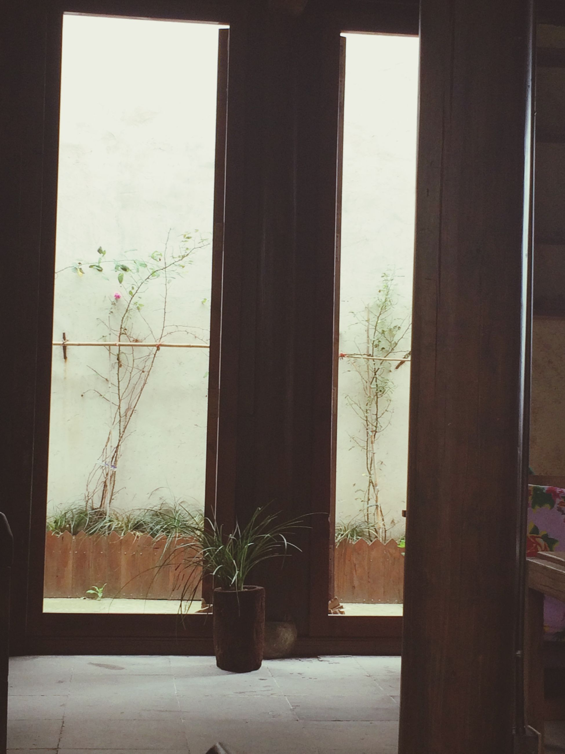 window, indoors, glass - material, transparent, home interior, window sill, potted plant, tree, curtain, plant, built structure, architecture, house, growth, day, looking through window, door, no people, glass, nature