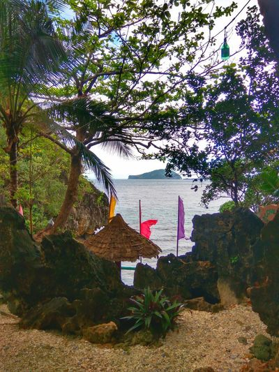 Tree Growth Nature No People Water Sea Outdoors Plant Beauty In Nature Sky Day Green Color Eyeem Philippines Cityscape Landscape Nipa Hut Shoreline