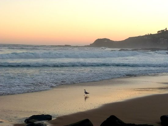 Royal National Park Nsw NSW Australia Australia Sydney Seagull Seagulls And Sea Sunset Beach Landscape Sea Sand Animal Wildlife Horizon Over Water Dusk Sky Clear Sky Scenics Outdoors Animal Reflection Nature Beauty In Nature Sunny Sun Tranquility The Great Outdoors - 2018 EyeEm Awards