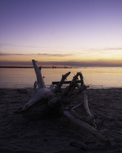 Driftwood on beach by sea against sky during sunset