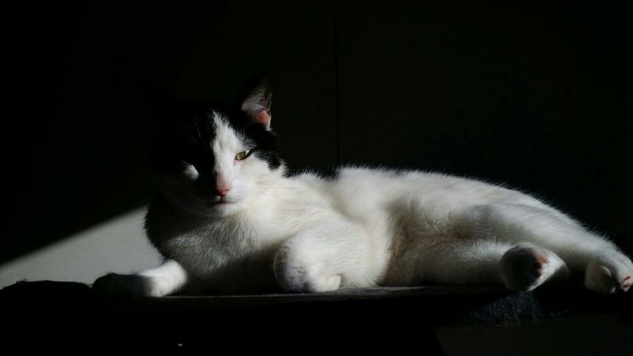 Portrait Of Cat Lying On Table In Darkroom