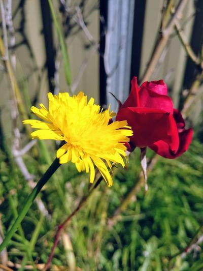 Flowers together Flower Sydney Rose Sydney Nature Love Sydney