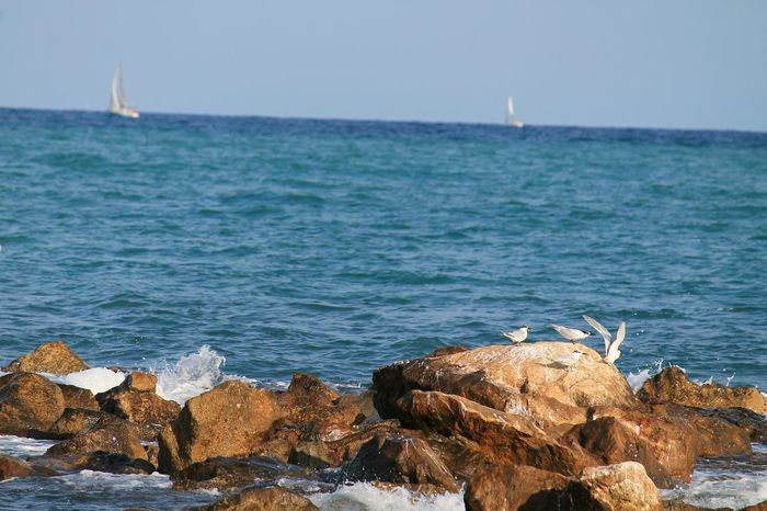 Sea Beach Water Travel Destinations Sea Life Blue No People Outdoors Nature Travel Wave Day Animals In The Wild Vacations Animal Wildlife Harbor Horizon Over Water Sky Nautical Vessel Beauty