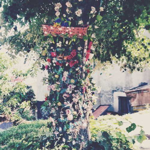 back streets of Istanbul can amaze you with such a fairy tree.. :) Istanbullovers Istanbul Fairy Tree Art