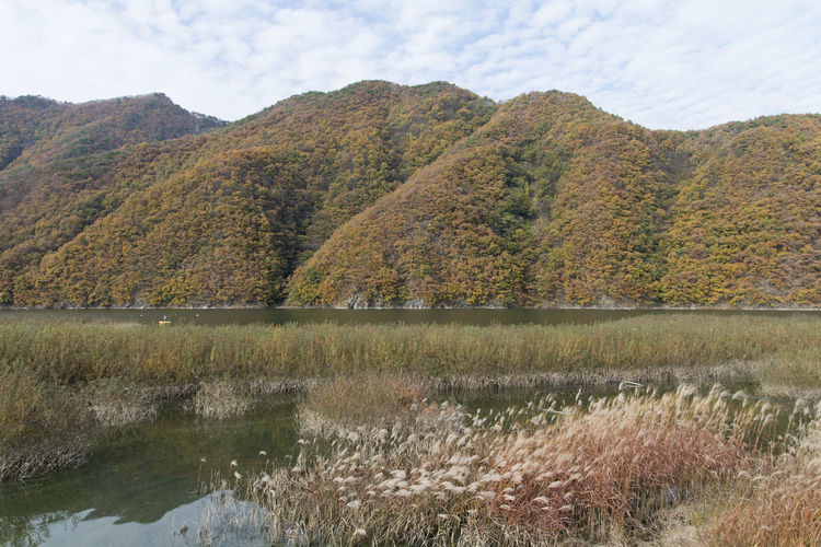 autumn landscape at Janggye Tourism Place in Okcheon, Chungbuk, South Korea Autumn Autumn River Janggye Okcheon Riverside Autumn Riverside Beauty In Nature Day Field Grass Growth Lake Landscape Mountain Mountain Range Nature No People Outdoors Plant River Riverside Photography Scenics Sky Tranquil Scene Tranquility Tree Water