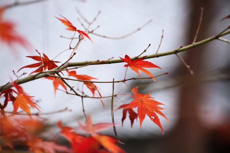 Photo taken in Kyoto, Japan