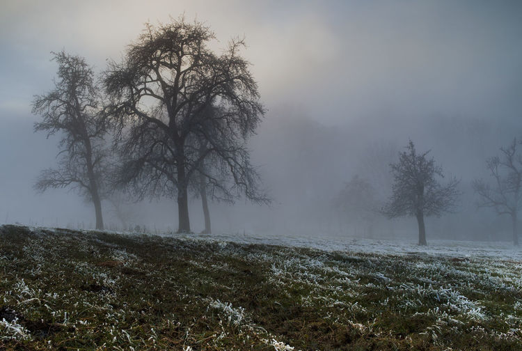 Beauty In Nature Cold Temperature Fog Grass Landscape Nature Tree Winter
