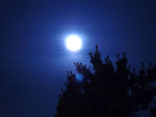 Big Moon Blue Moon Bright Moon Bright Moon 🌕🌚🌝 Full Moon Moon Moon Close Up Night Photography Painting With Light Pinkfire